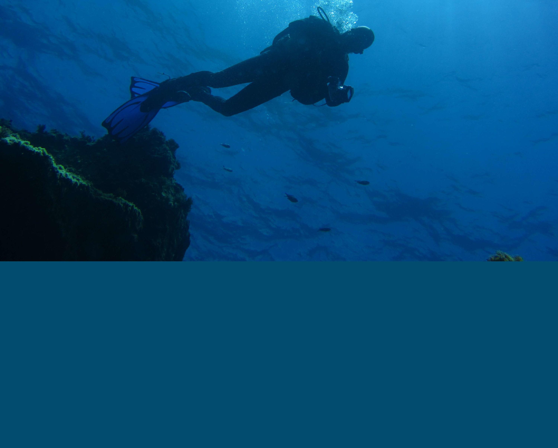 descubare atlantico – tauchen auf Teneriffa